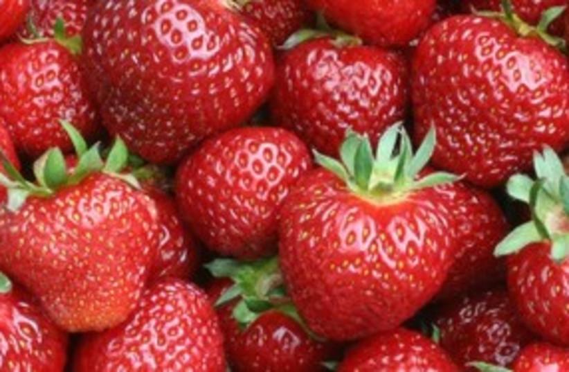Strawberries 311 (photo credit: Israel21C)