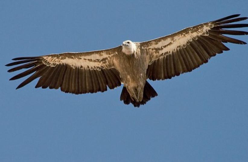 Eagle 521 (photo credit: Courtesy)