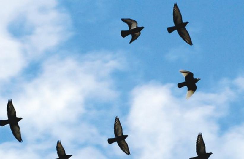 Birds 521 (photo credit: Courtesy)