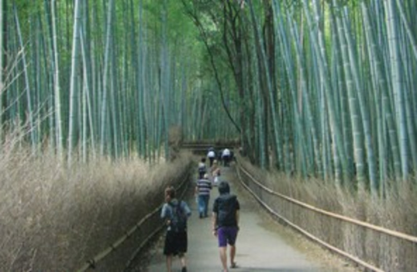 Japanese Bamboo Forest 311 (photo credit: Moran Snir)