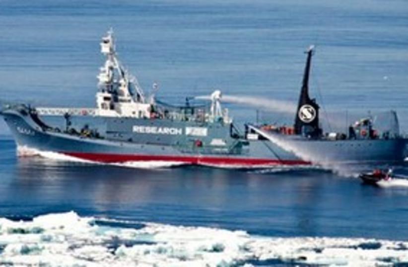 whaling ship 311 (photo credit: AP)