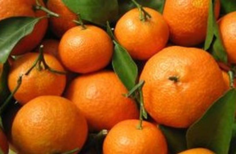 Citrus Fruit 311 (photo credit: Courtesy)
