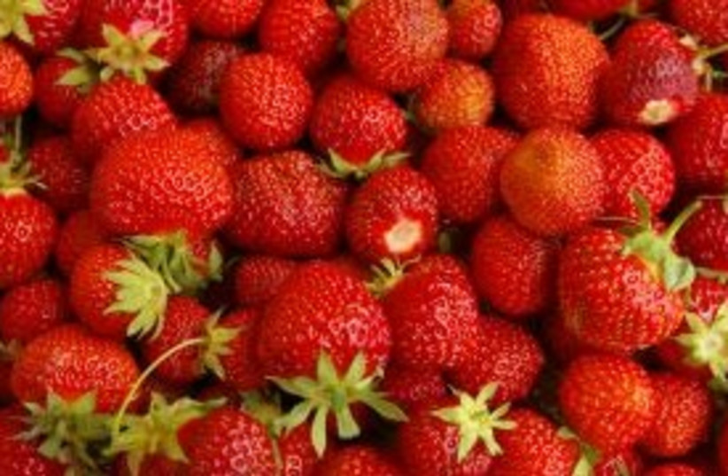 Strawberries 311 (photo credit: Courtesy)