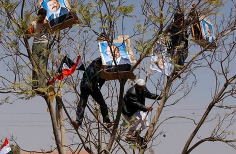 Supporters of Saleh climb tree to hang protrait