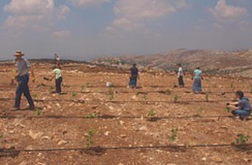 US college students plant a vineyard near Har Brac (photo credit: Abe Selig)