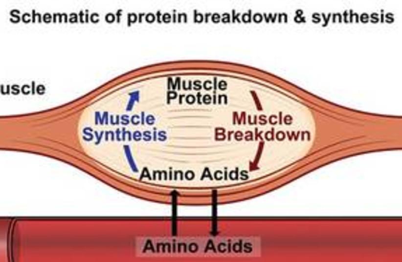 Protein 311 (photo credit: Courtesy)