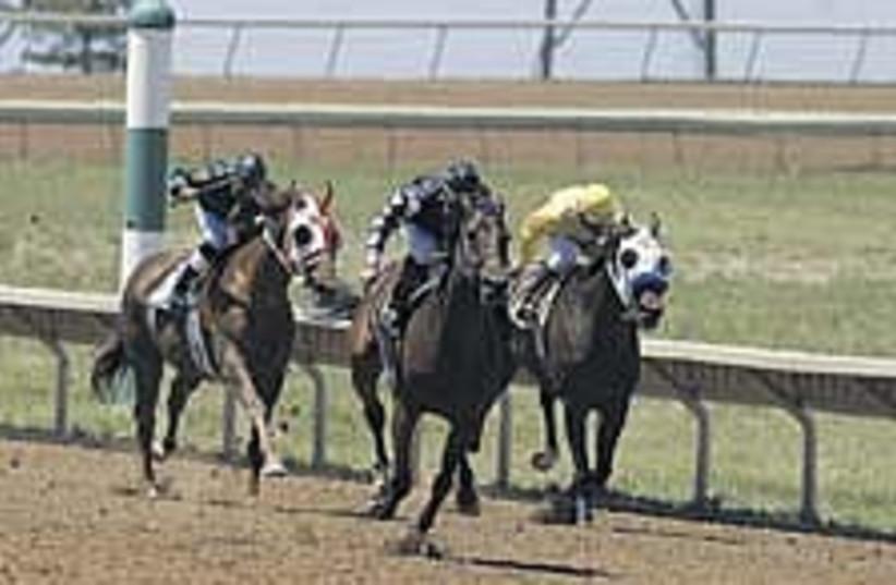 horse racing 224.88 (photo credit: Courtesy)