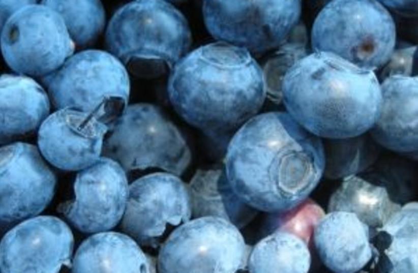 Blueberries (photo credit: courtesy)