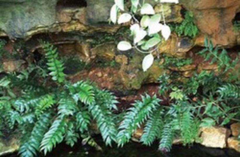 Botany and Birds 250 (photo credit: Courtesy)