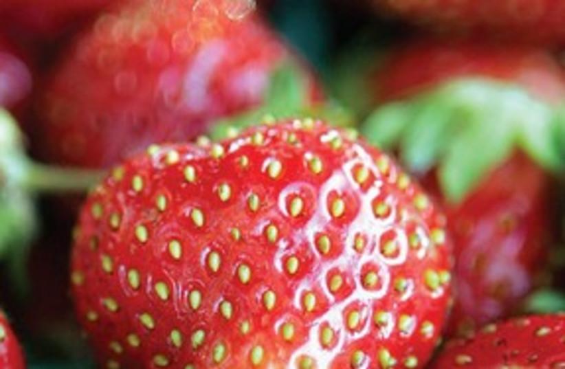 Strawberry jam_311 (photo credit: Courtesy)