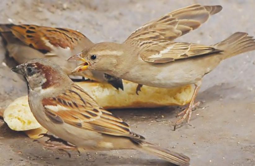 Birds 521 (photo credit: Israel Weiss (weisssi@bezeqint.net) http://artfram)