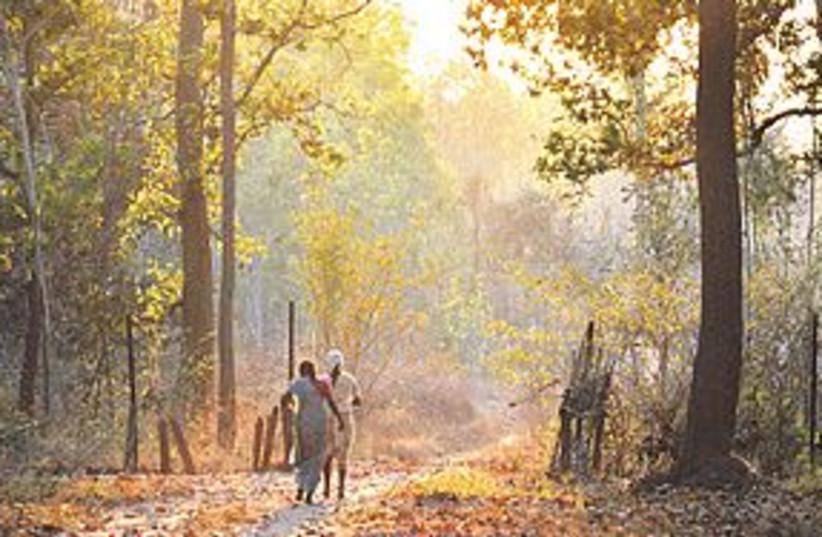 India wildlife 311 (photo credit: courtesy)