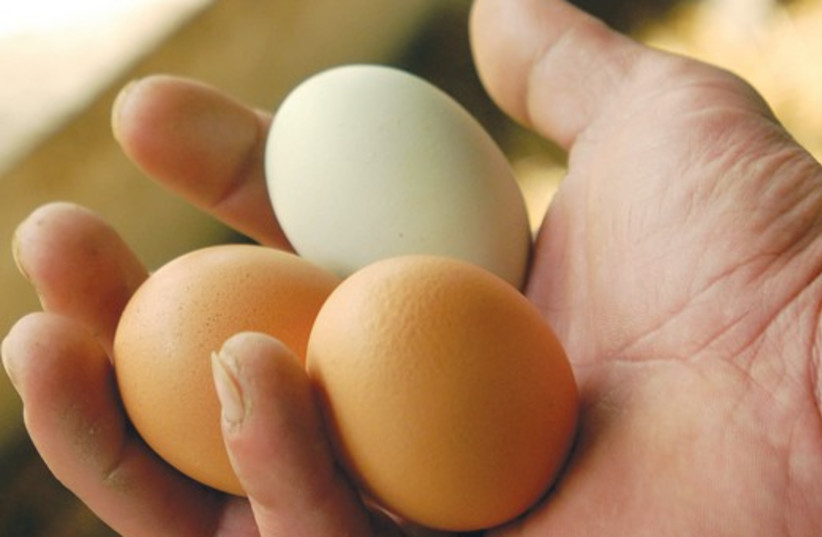eggs in hand 521 (photo credit: Ron Tarver/Philadelphia Inquirer/MCT)