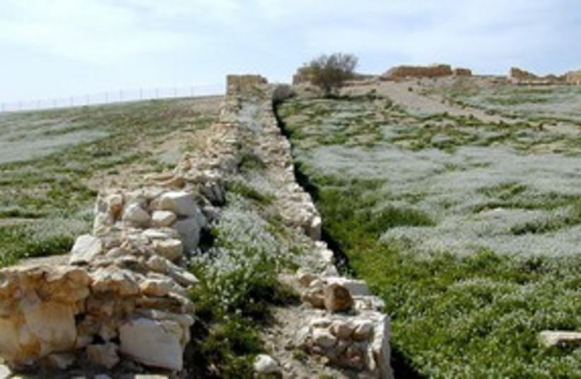 Tel Arad 311 (photo credit: BiblePlaces.com)