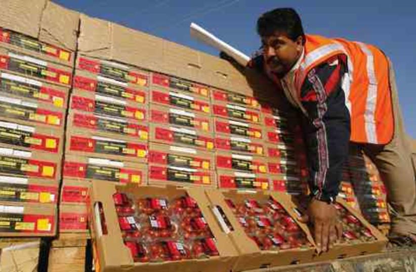 Gazan Tomato Export (photo credit: Ibraheem Abu Mustafa/Reuters)