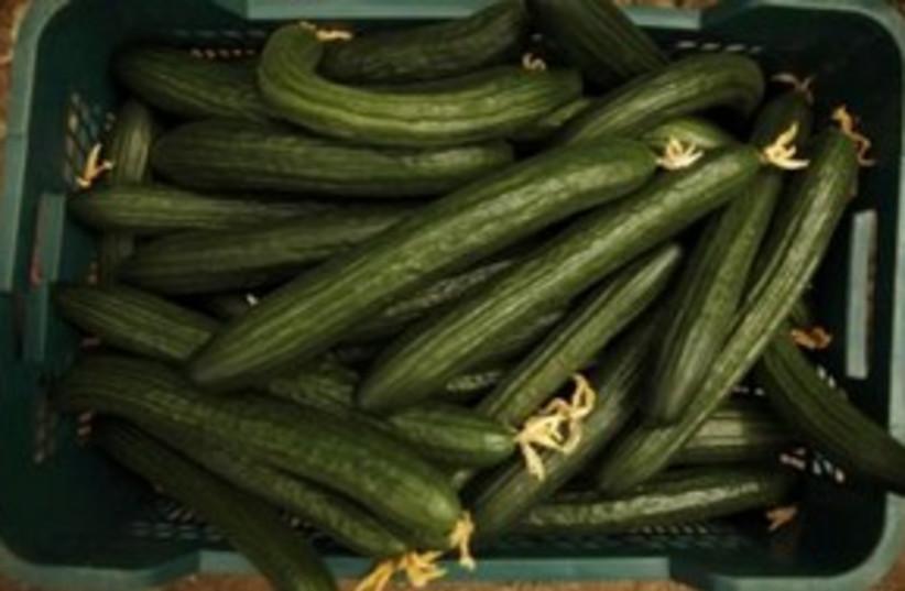 spanish cucumbers_311 reuters (photo credit: REUTERS/Jon Nazca)