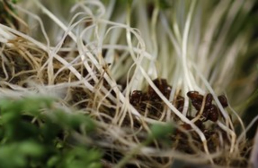 bean sprouts_311 reuters (photo credit: Leonhard Foeger / Reuters)