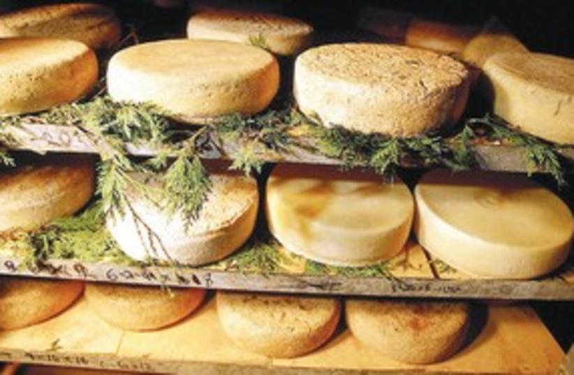 Cheese (photo credit: MCT)