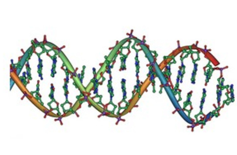DNA strand double helix 311 (photo credit: Jerome Walker)