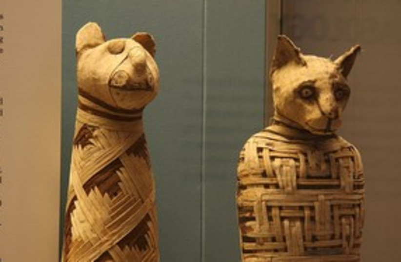 animal mummies (photo credit: British Museum)