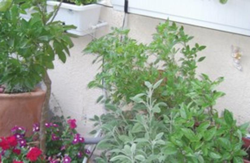 Fresh herbs (photo credit: Courtesy)