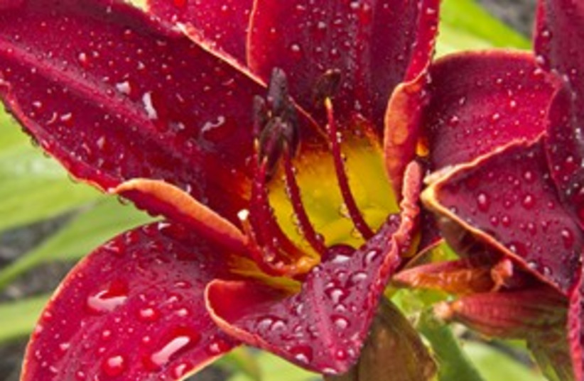 Close up a flower 311 (photo credit: Tom Climes)