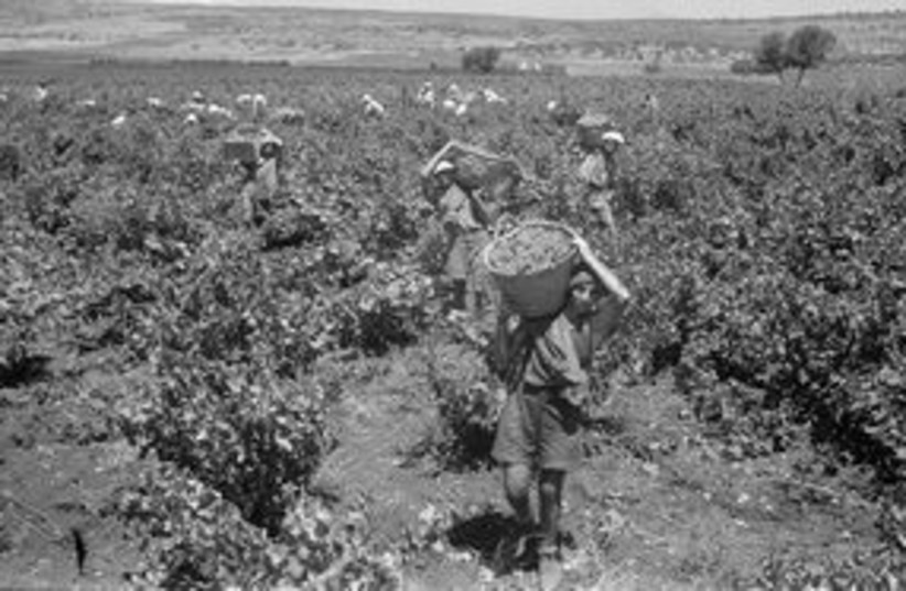 Grape-picking in the fields