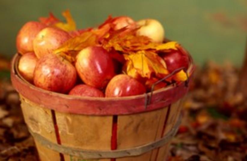 Apples! Autumn! _311 (photo credit: Thinkstock/Imagebank)