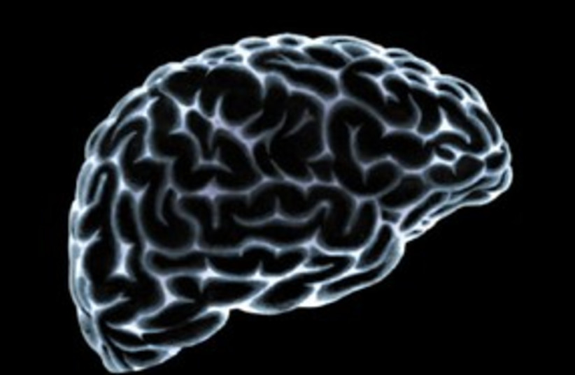 Brain 311 T (photo credit: Thinkstock/Imagebank)