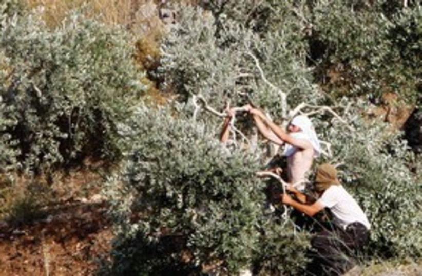 Settlers breaking olive tree branches R 311 (photo credit: Reuters)