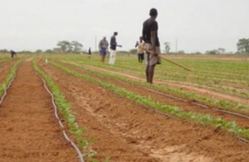 Agriculture in Africa 311 (photo credit: Courtesy No Camels)