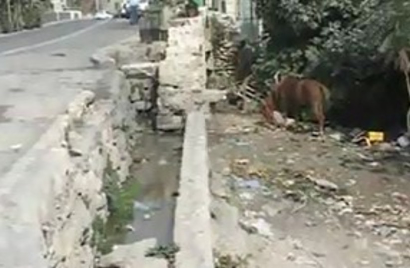 Filth in the Kidron Valley 311 (photo credit: The Media Line)