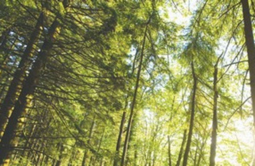 Forest trees environment green 311 (photo credit: Thinkstock)