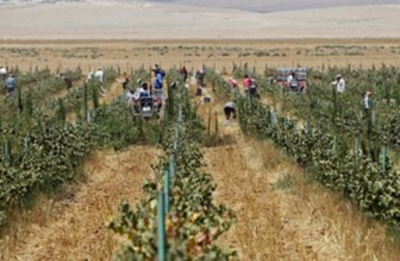 Grape farm, Mafraq, Jordan_311  (photo credit: Reuters/Ali Jarekji)
