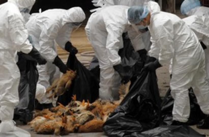 bird flu culling chicken hong kong 311 (photo credit: REUTERS)