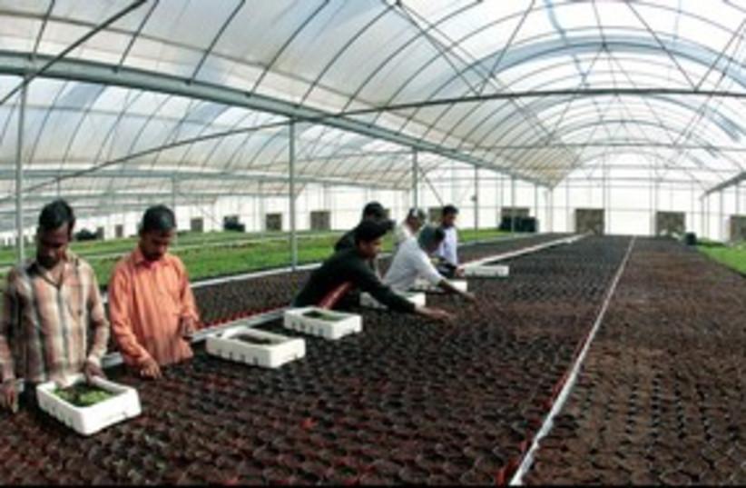 Qatar agriculture 311 (photo credit: FADI AL-ASSAAD)