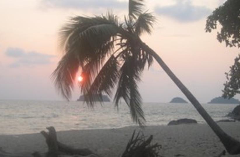 Palm Tree in Thailand, Koh Chang_311 (photo credit: Elana Kirsh)