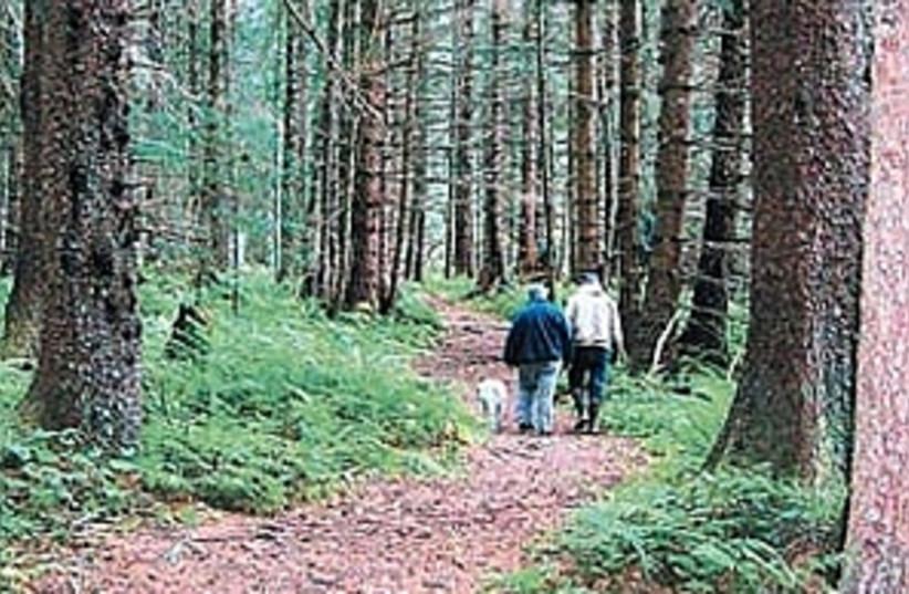 alaska forest 298.88 (photo credit: Dan Izenberg)