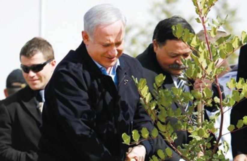 Netanyahu plants a tree on Tu Bishvat 390 (photo credit: Amir Cohen/Reuters)