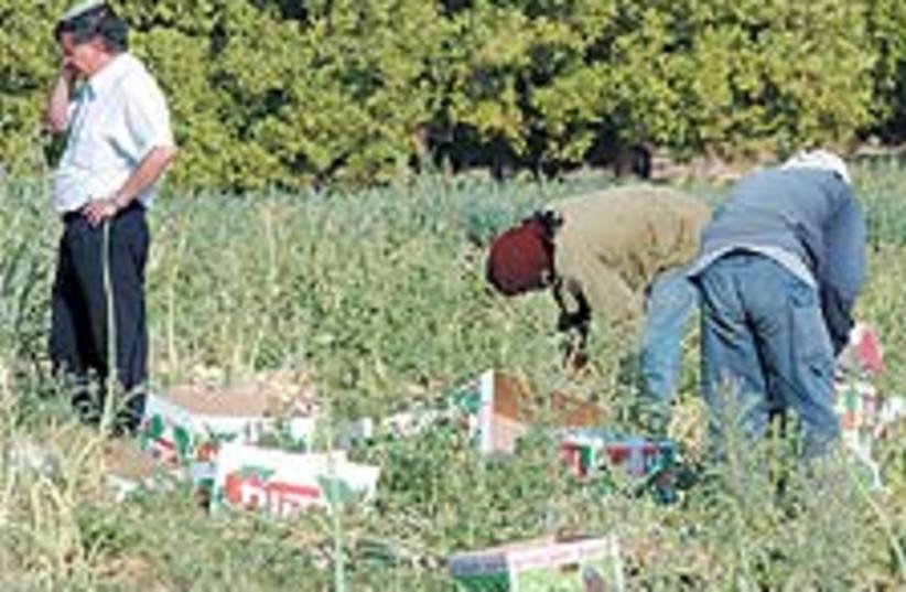 farm biz 88 224 (photo credit: Ariel Jerozolimski)