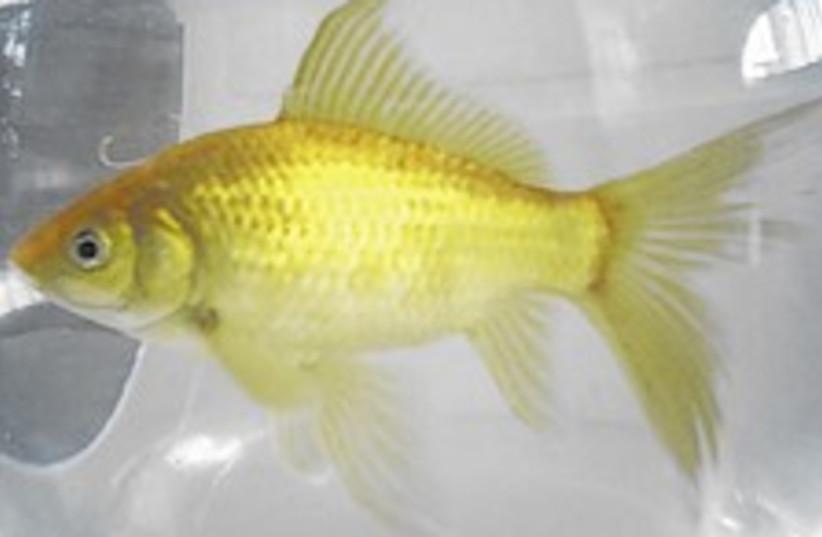 parkinson fish 224.88 (photo credit: Courtesy)