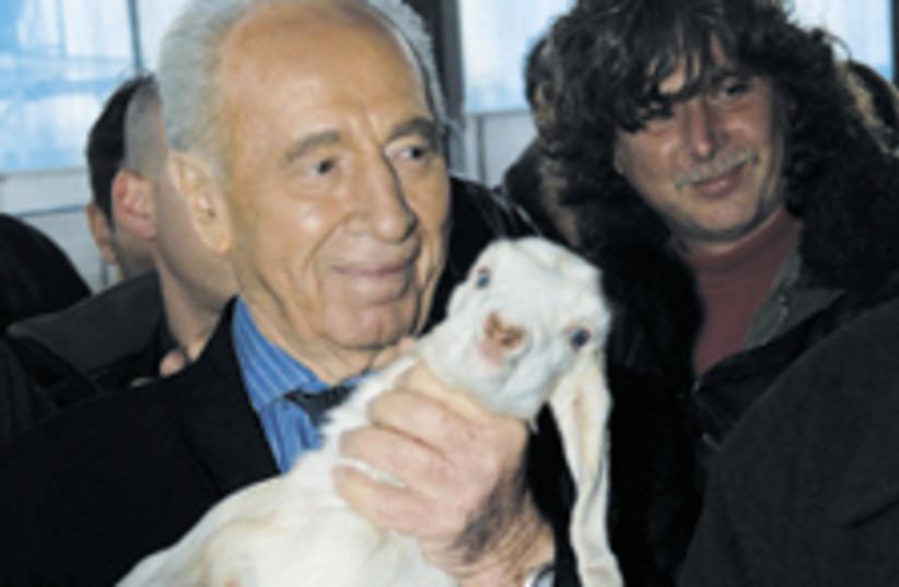 peres lamb 224 (photo credit: GPO)