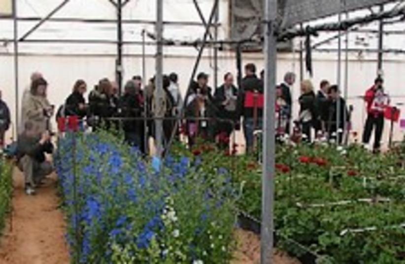 greenhouse (photo credit: )