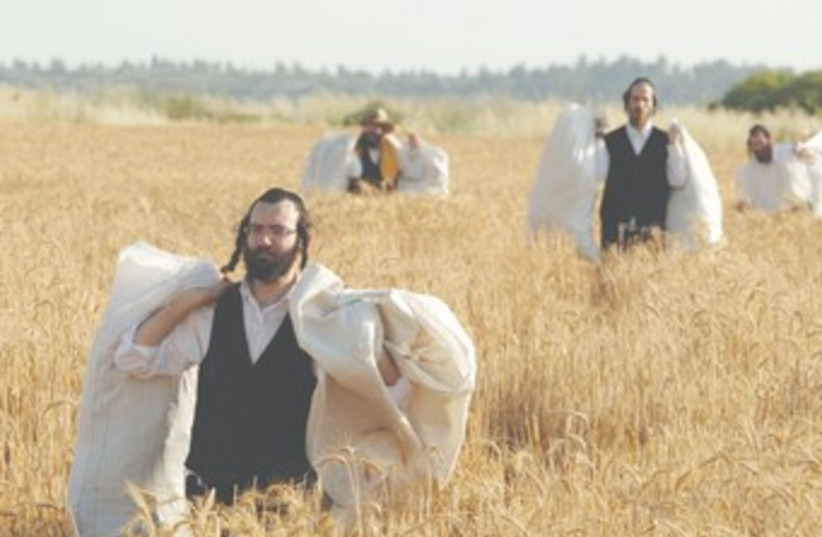 Haredim carry wheat-filled sacks for Pesah 370 (photo credit: REUTERS)