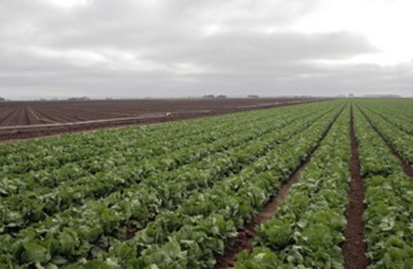 Produce lettuce crops farming 370 (photo credit: Thinkstock/Imagebank)