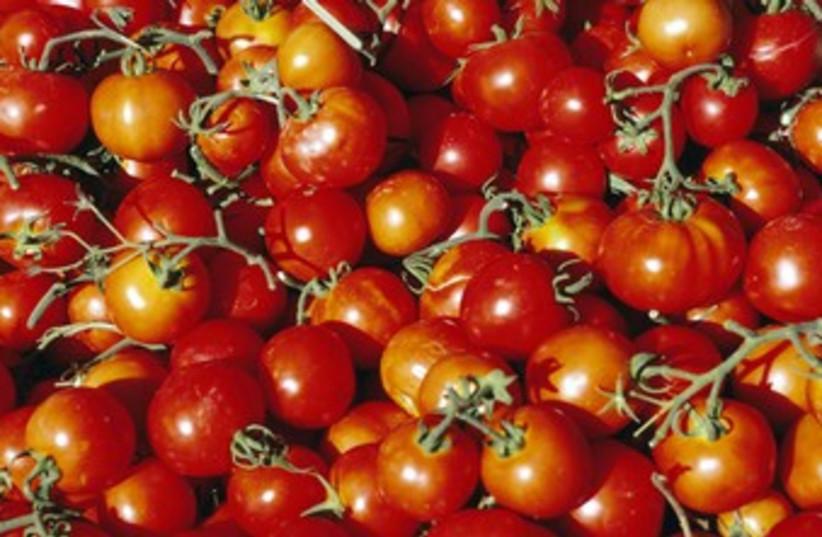 tomatoes 370 (photo credit: Thinkstock/Imagebank)
