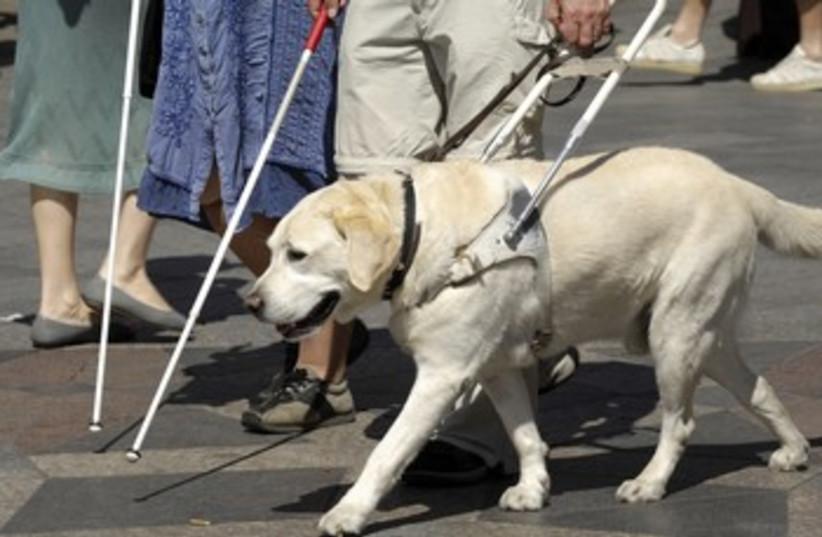 Guide dog 370 (photo credit: Thinkstock/Imagebank)