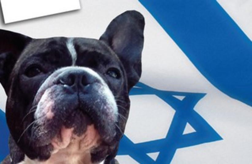 Hugo the dog (photo credit: Avital Sahar)