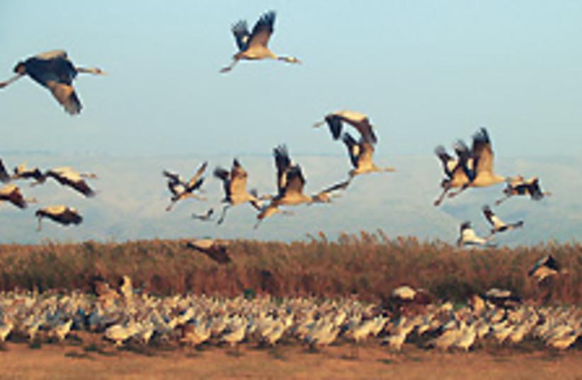 birds 88 224 (photo credit: Atira Winchester)