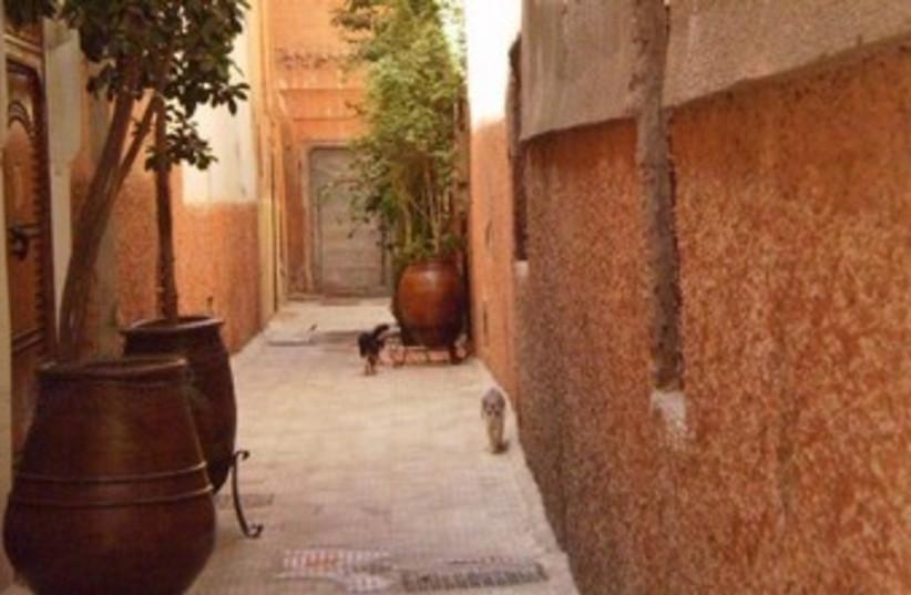 Marrakesh (photo credit: Clare Wrigglesworth)